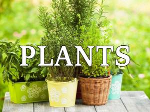 plants in Australia